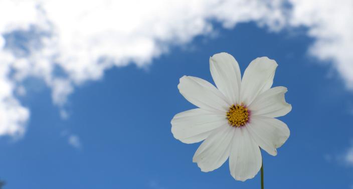 spring blog image
